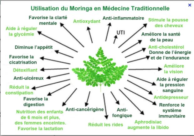 extrait du site http://feuille-de-moringa.com/