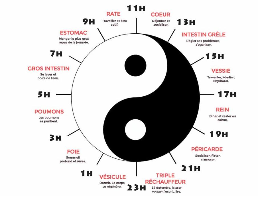 Horloge Biologique en médecine chinoise