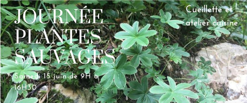 Plantes sauvages cueillette et cuisine